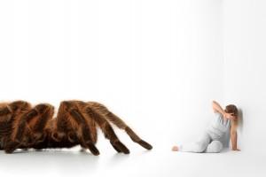 Imagen de fobia específica, problema tratado en IPSIVA, Instituto Psicológico Valenciano de Trastornos y Problemas Obsesivos